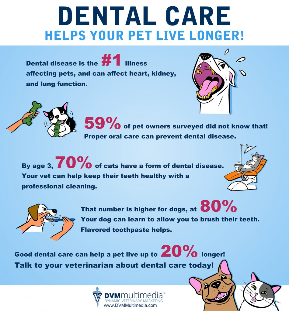 Pets Need Dental Care!